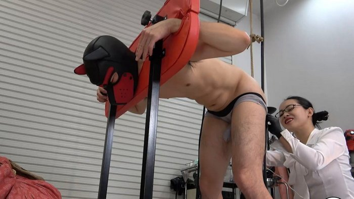 Mistress Hinako again back at her slave with anal vibrator